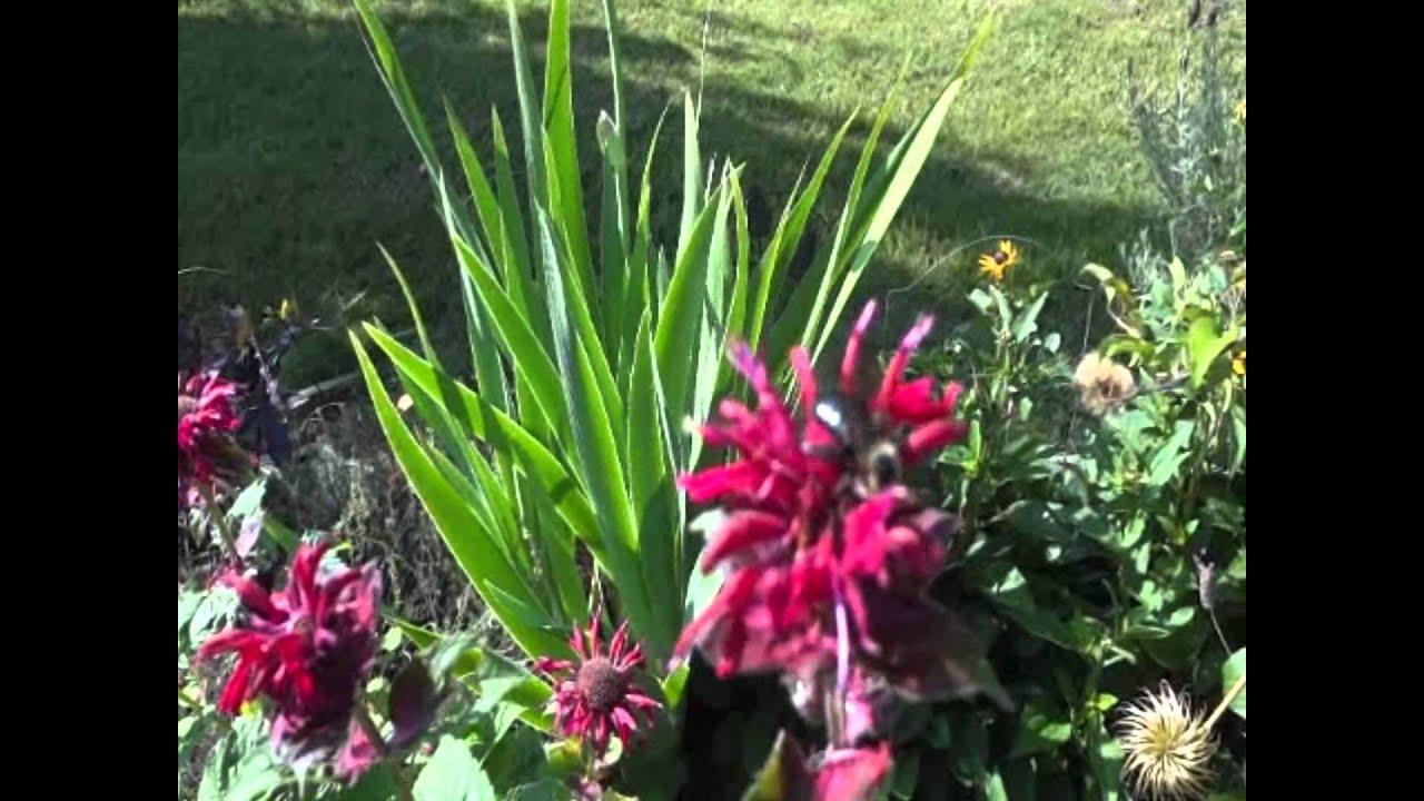 Beautiful backyard gardens - Beautiful Backyard Garden