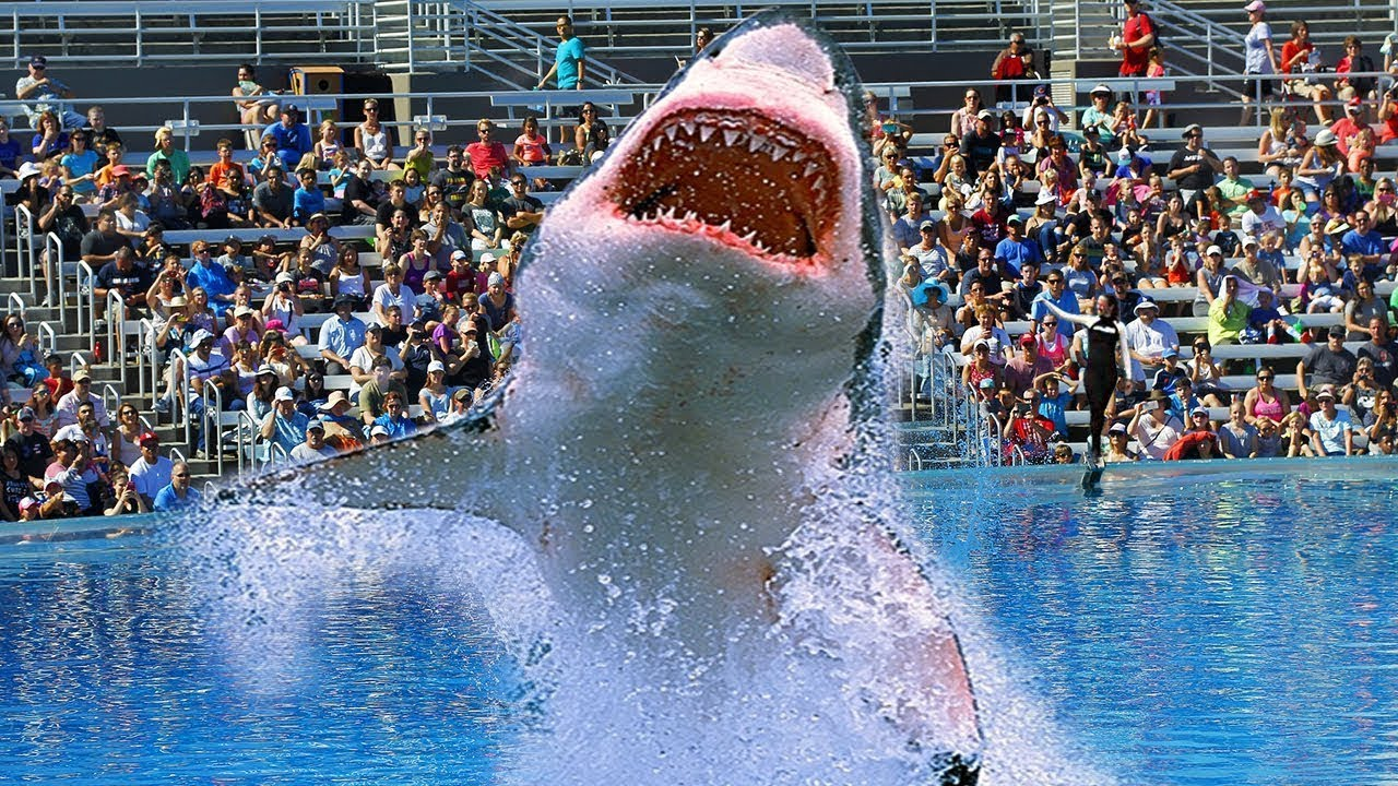 Download Why NO Aquarium In The WORLD Has A Great White Shark!
