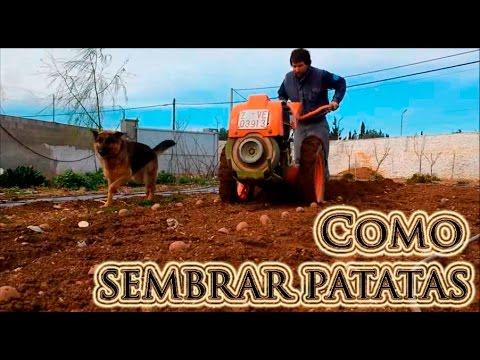 Como sembrar patatas en el huerto youtube for Como cultivar patatas