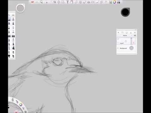 Digital Sketching Bird Step by Step