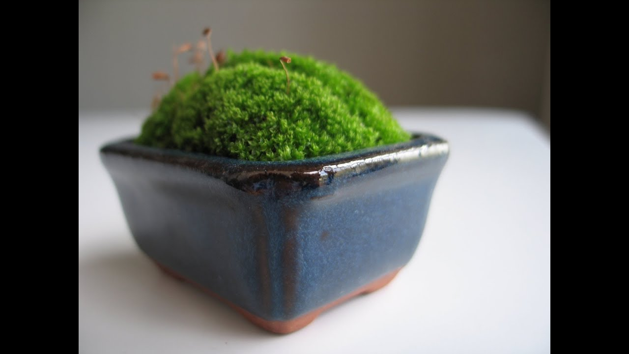 Small House Plants How To Make A Moss Pot Emmymade Youtube