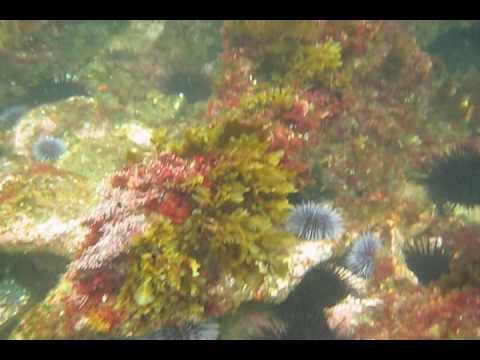 Winfield Scott Wreck off Anacapa Island