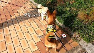 공원 산책중 친구만난 강아지 반응은?!
