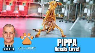 Hope Rescues Dog That Can't Stand Up Named Pippa - @Viktor Larkhill Extreme Rescue
