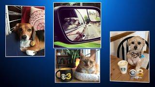 CBS3 Celebrates National Pet Day