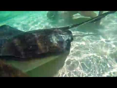 Feeding Stingrays in Exuma, Bahamas