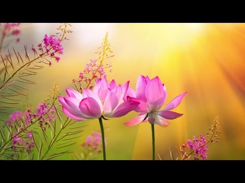 """Peaceful Music, Relaxing Music, Instrumental Music, """"A Pathway to Peace"""" by Tim Janis"""