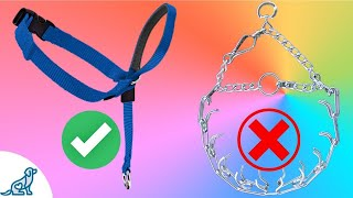 The Best Training Collar For Dogs - You May Already Own It! - Professional Dog Training Tips
