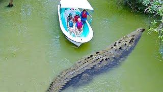 15 Largest Crocodiles In The World