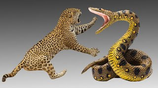 Download Anaconda vs Jaguar | Perbandingan dan Pertarungan!