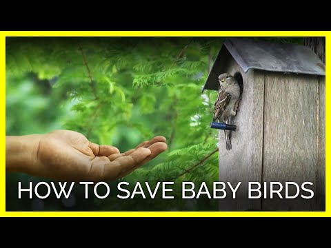 you can help baby birds animal rescue how to youtube rh youtube com