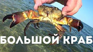 ШОК!!! БОЛЬШОЙ КРАБ в Крыму!!!