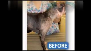 Pet Ozone Skin Therapies By Iv San Bernard Usa