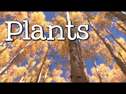 What is a Plant? All About Plants for Kids - FreeSchool