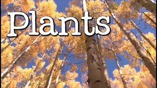 What Is A Plant? All About Plants For Kids   Freeschool