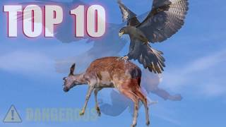Eagles & Worst Eagle Attacks in the World!