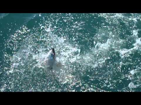 makah king salmon fishing 28 mi. from cape flattery