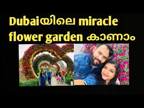 #MIRACLEGARDEN #2021 #DUBAI #WORLDLARGESTFLOWERGARDEN #latestviewfromdubaimiraclegarden #fullview
