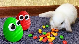 КРОЛИК НОЛИК делает сложный ВЫБОР. Яйцо Сюрприз или Фрукты? Обзор на игрушки Барбоскины