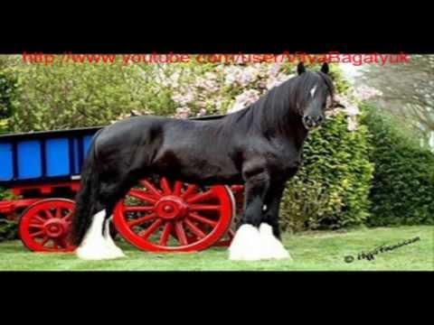 7 самых красивых пород лошадей-тяжеловозы