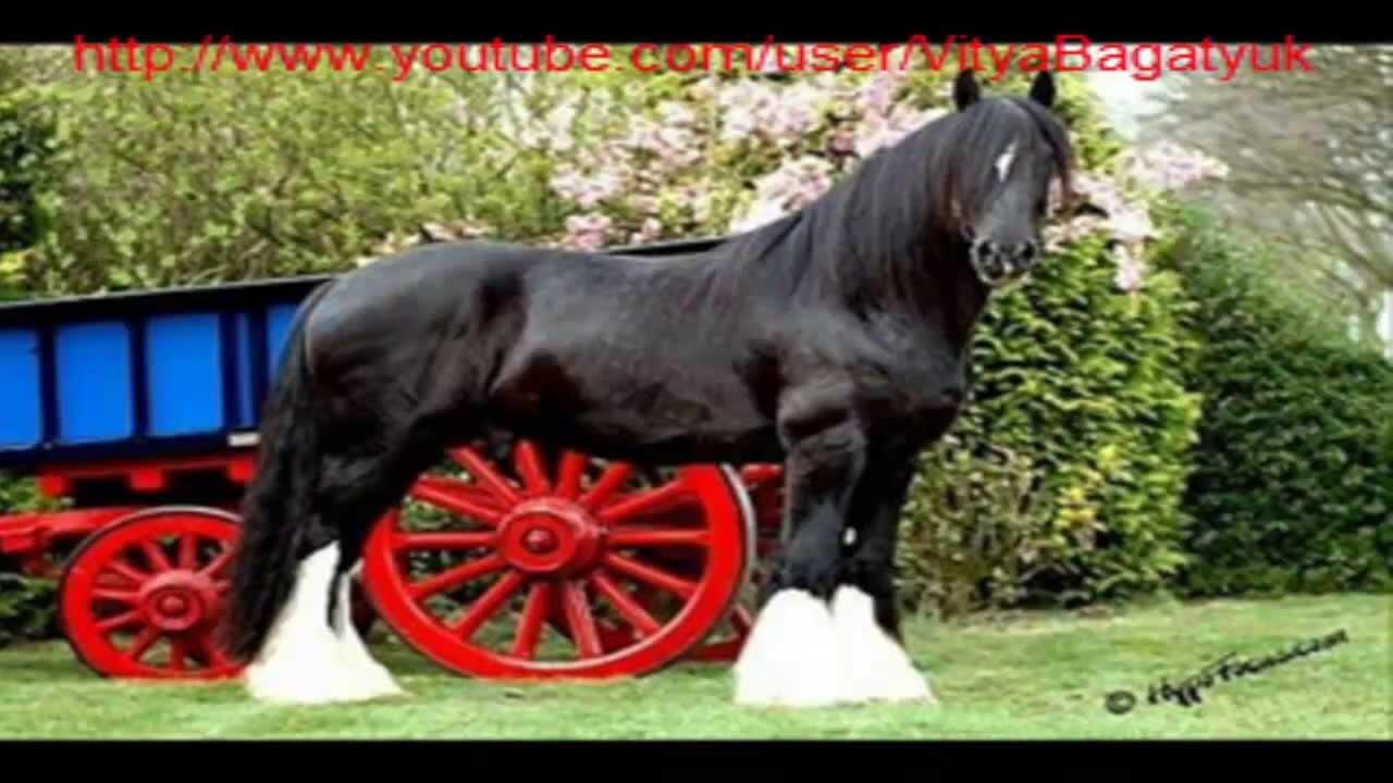 Цена по запросу. Контакты: tel. : +7(901)797-52-23 whatsapp/viber/imessege. Больше лошадей на продаже, вы сможете найти в нашей группе в вк.