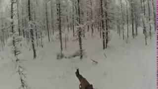 Охота на оленя зимой cекреты и уловки
