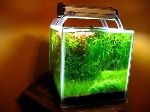 Planted shrimp cube youtube for Aquarium cube