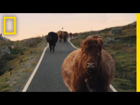 See the Quiet Beauty of Farm Life on the Scottish Isles | Short Film Showcase