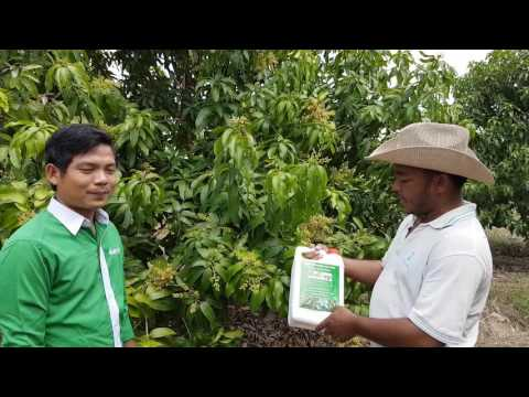 Bopha Organic Agriculture 2