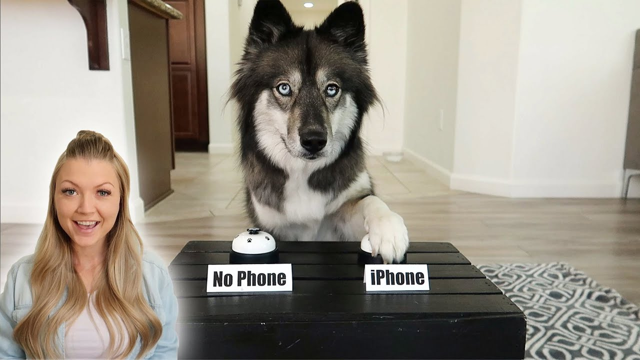 My Dogs Decide If I Should Buy My Girlfriend The New iPhone!