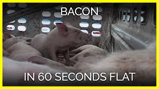 Bacon in 60 Seconds Flat