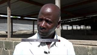 SECRET TO SUCCESSFUL PIG FARMING in kenya