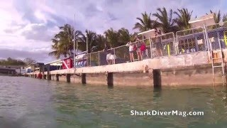 Video Bull Shark Diving at the Pier, Bimini Bahamas download MP3, 3GP, MP4, WEBM, AVI, FLV Agustus 2018