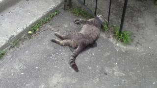 Живодёры в Сумах. Убийство котов (Сумы, пр.М.Лушпы 7)(05072017)