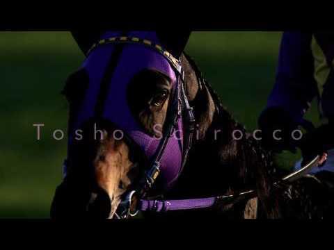 【予想】 2016年 新潟記念(G3) 登録馬見解【競馬】