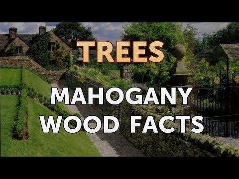 Mahogany Wood Facts
