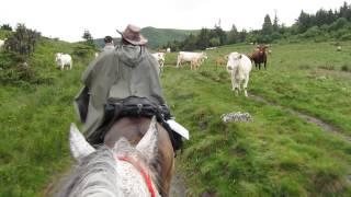 Traversée estive à cheval en Auvergne juin 2014