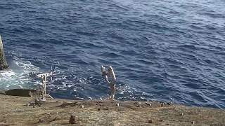 Repeat youtube video 石鯛釣り 柏島クメナガセ