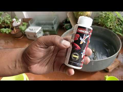 How To Prevent Your Fish From Fungal Disease And External Parasites | Fish Care