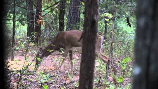Crossbow Deer Hunt with Incredible Slow Motion Shot