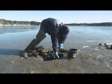 Longer 'red Tide' Outbreak Impacting Maine Shellfish Industry