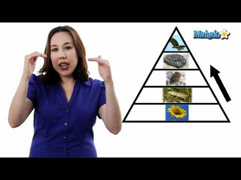 Learn Biology: Trophic Levels and Producer vs. Consumer