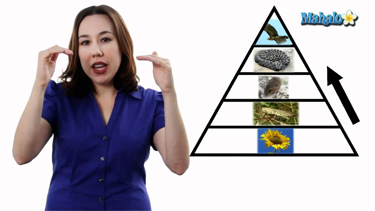 learn biology: trophic levels and producer vs. consumer - youtube