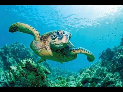 Amazing Philippines Trip to Balicasag Island for dolphins & turtles & snorkeling drone footage