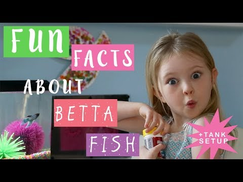 Fun Facts About Betta Fish