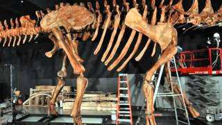 Building the biggest dinosaur that ever lived