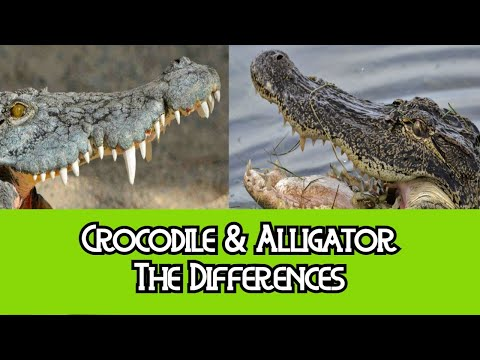 Alligator & Crocodile - The Differences thumbnail