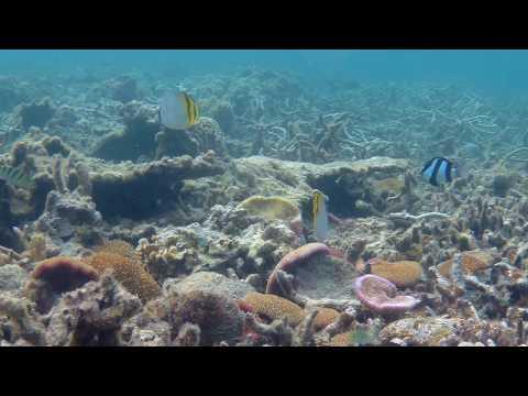 Snorkeling In MAURITIUS 7 - Vagabond Butterflyfish
