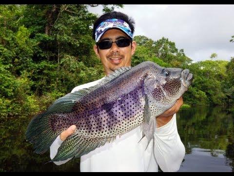 Rainbow Bass Guapote Fishing Nicaragua Costa Rica
