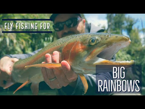 Back Country Fly Fishing In New Zealand For Big Rainbow Trout